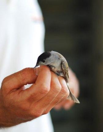 Agamon Hula - thiên đường của các loài chim và con người