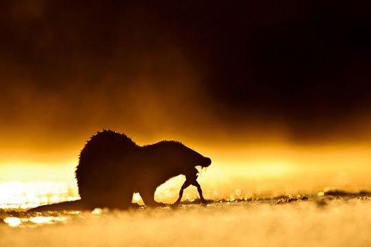 Ấn tượng thế giới tự nhiên qua ảnh