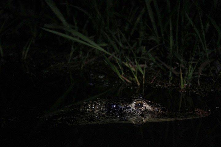 Ảnh động vật tuần qua: Cá đi bộ ở Mexico