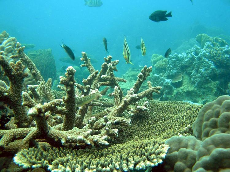Axit trong nước biển đang phá hủy các rạn san hô