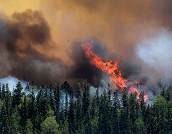 Báo động đỏ nguy cơ cháy rừng Tây Nam của Mỹ