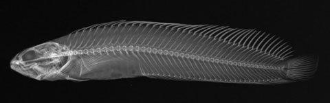 Bên trong cơ thể cá