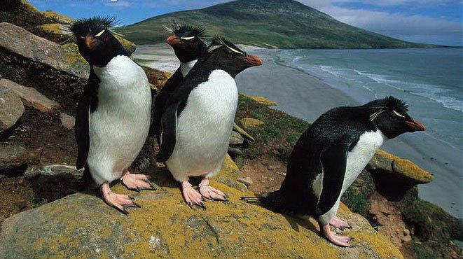 Bí ẩn chim cánh cụt biến mất mùa đông