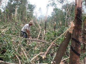 Bình Phước: Mưa đá, lốc xoáy gây thiệt hại lớn
