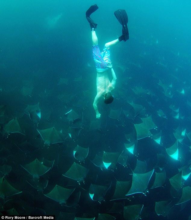 Bơi cùng hàng ngàn con cá đuối độc