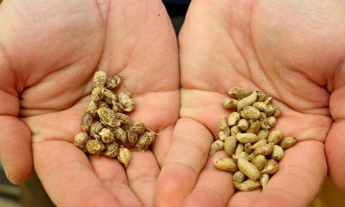Bước tiến sinh học này có thể cứu đói hàng trăm triệu người trong tương lai