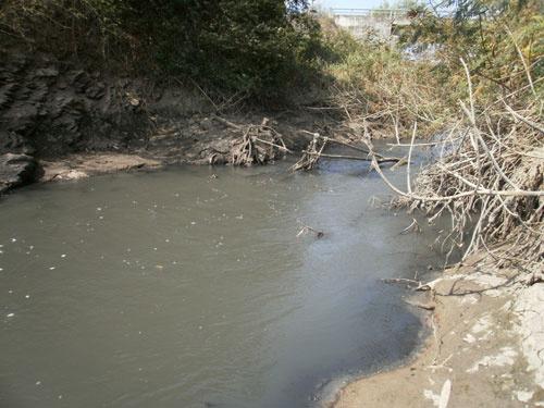 Cá chết hàng loạt trên sông Sêrêpốk