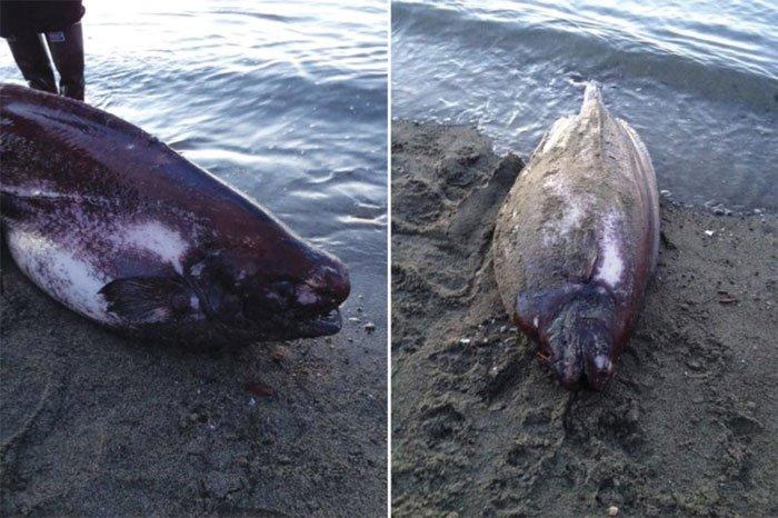 Cá lạ sống ở độ sâu 1.500 mét dạt vào bờ biển Alaska