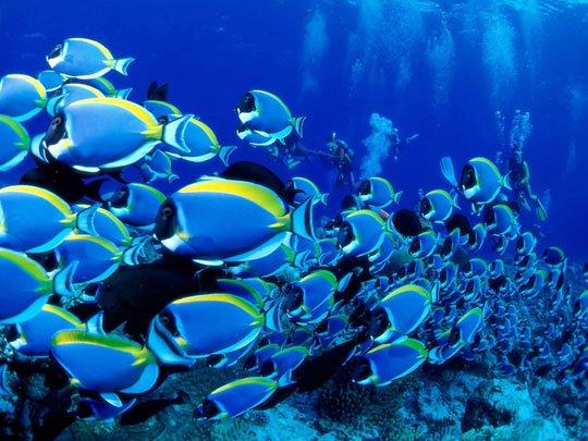 Cá ngoài biển sẽ di chuyển về đâu?