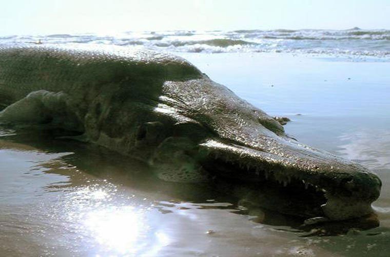 Cá sông Mê Kông được xếp hạng quái thú thế giới