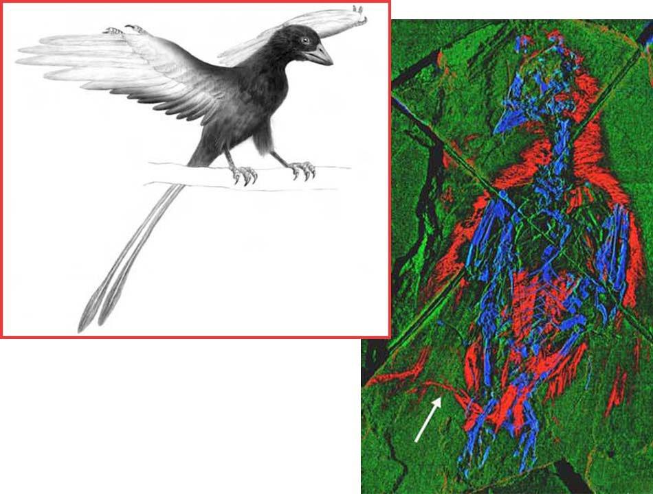Các loài chim thời tiền sử có mầu sắc gì