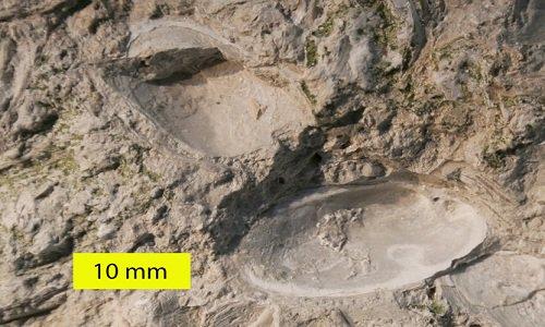 Các mẫu hóa thạch động vật độc đáo trên thế giới