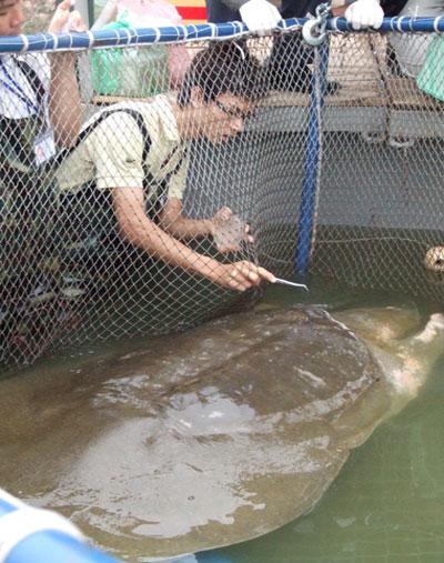 Cận cảnh chăm sóc Rùa trong bể nhân tạo