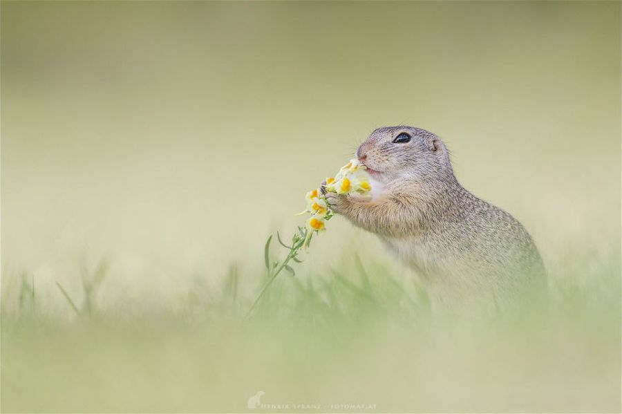 Cận cảnh cuộc sống đầy ắp niềm vui của loài sóc đất