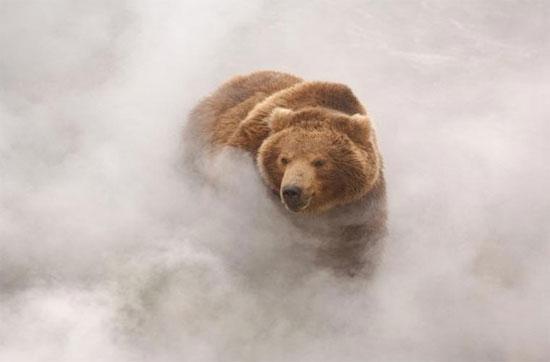 Cận cảnh gấu Nga đùa giỡn với suối lửa 250 độ C