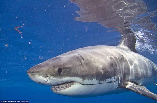 Cận cảnh hung thần cá mập xấu chưa từng thấy
