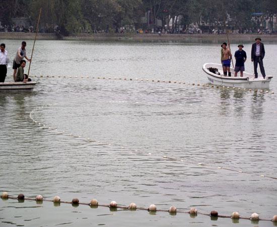 Căn cứ chứng minh Rùa Hồ Gươm là hậu duệ thần rùa