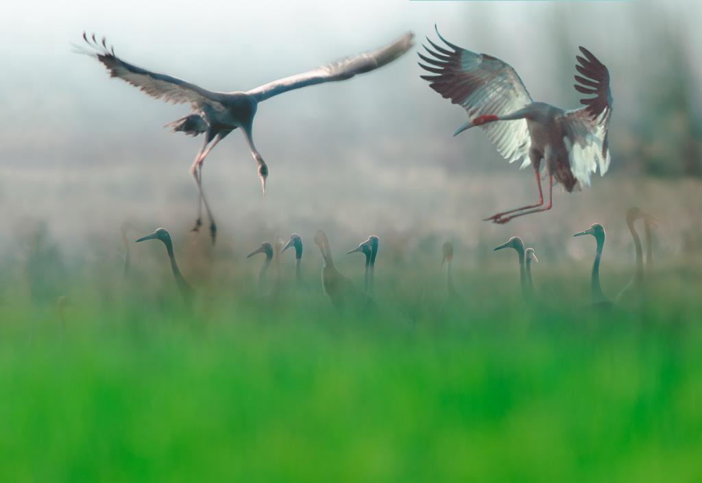 Cảnh thiên nhiên ngoạn mục trong bộ ảnh Sếu của nhiếp ảnh gia Tăng A Pẩu