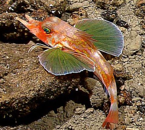Cảnh tượng kỳ thú dưới biển tại Indonesia