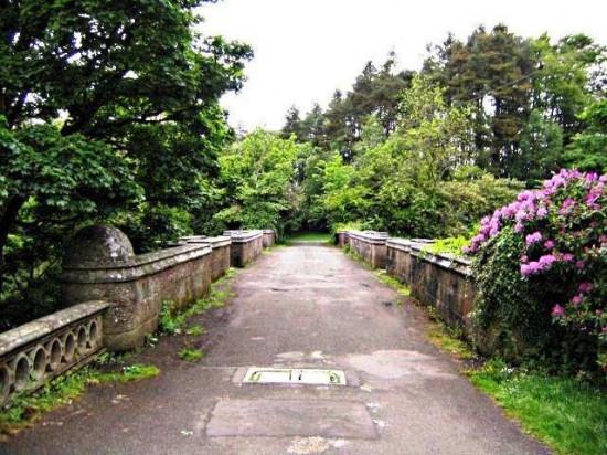 Cầu tự sát của chó ở Scotland