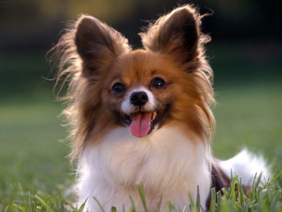 Chó có thể tìm ra lỗi trong phép tính đơn giản