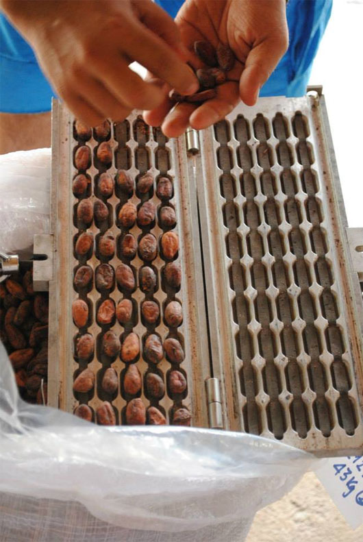 Chocolate Việt nổi tiếng thế giới được sản xuất như thế nào?