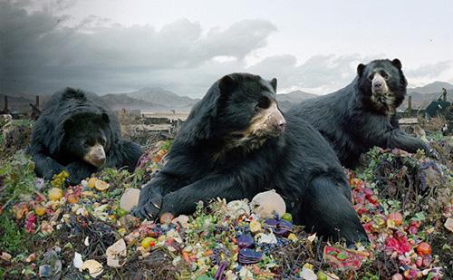 Chùm ảnh muôn loài trong thảm họa môi trường