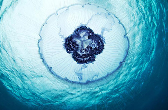 Chùm ảnh những vật thể lạ dưới đáy đại dương