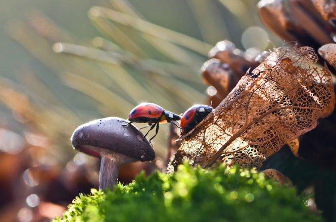 Chùm ảnh về những cây nấm đẹp trong tự nhiên