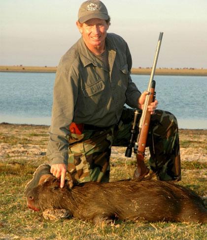 Chuyện khó tin về loài chuột to như lợn ở Nam Mỹ