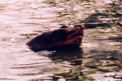 Có Tam đại đồng đường nhà Rùa ở Hồ Gươm?