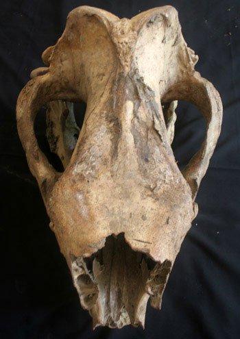 Con tê giác cuối cùng ở Việt Nam đã bị bắn chết?