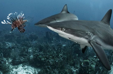 Cuộc chiến giữa cá mập và cá rồng