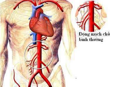 Da: Nguyên liệu để sản xuất mạch máu