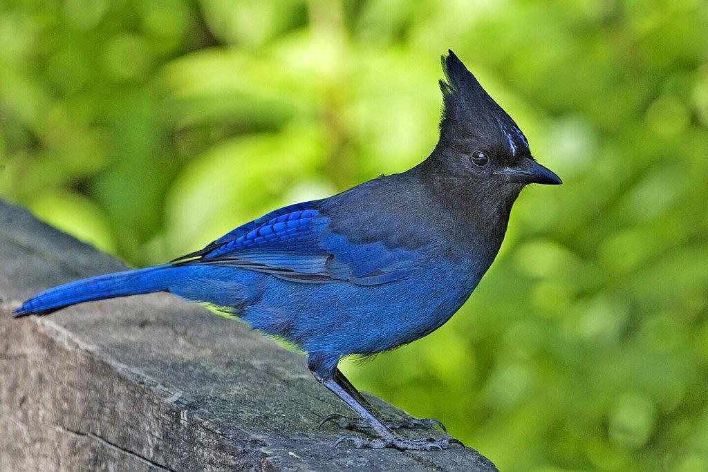 Điểm danh top 10 loài chim đẹp nhất thế giới