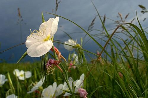 Đồng cỏ Kansas bốn mùa biến hóa