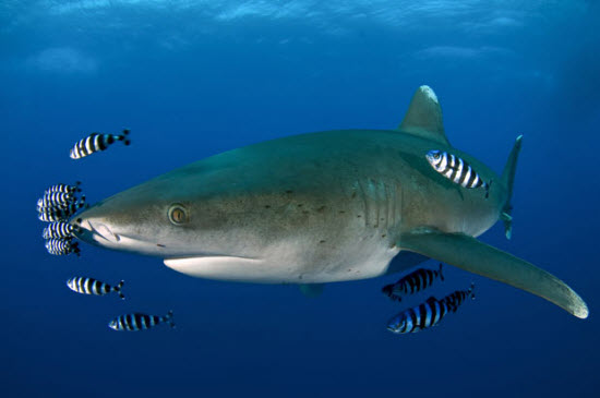 Động vật khoe sắc dưới biển sâu