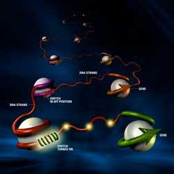 Đừng mong sớm có nghiên cứu đột phá về gene