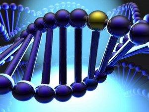 Gen có vai trò chính trong sự phát triển trí nhớ
