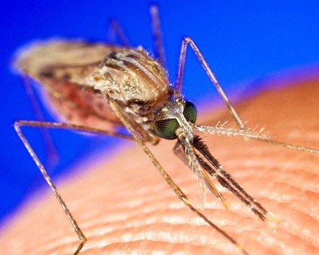 Hai biện pháp loại trừ bệnh sốt rét vào năm 2015