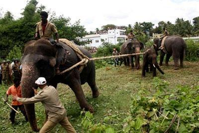 Hãi hùng cảnh voi Ấn Độ tấn công người ngay trên phố