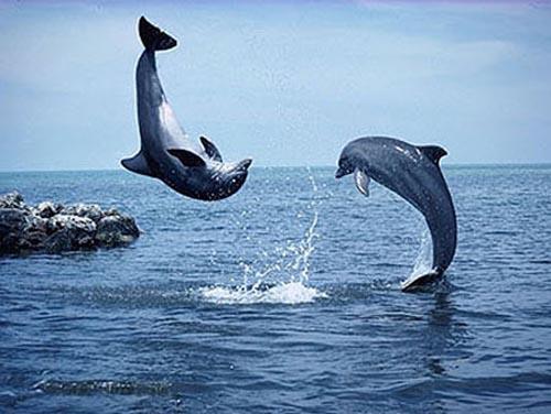 Hàn Quốc tăng cường bảo vệ cá voi