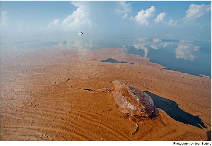 Hậu quả ghê gớm từ vụ tràn dầu lớn nhất lịch sử