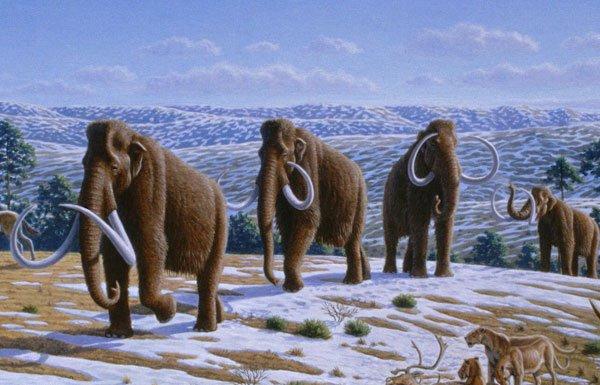 Hé lộ nguyên nhân thật sự về sự tuyệt chủng của voi ma mút