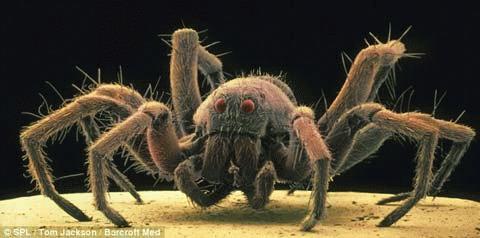 Hình ảnh 3D của những 'quái vật tí hon'