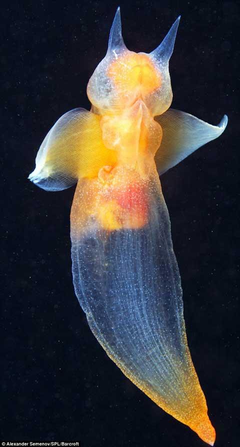 Hình ảnh kỳ thú các sinh vật dưới sâu đại dương