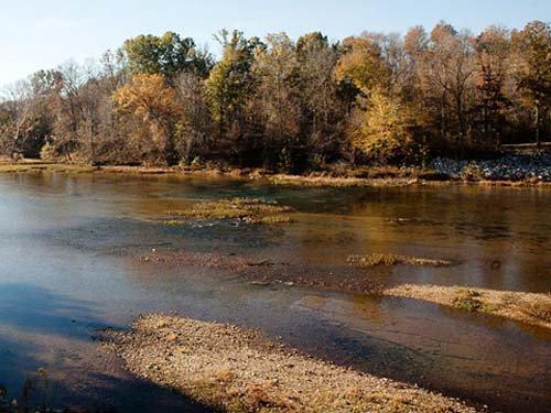 Hình ảnh tôm sông khổng lồ