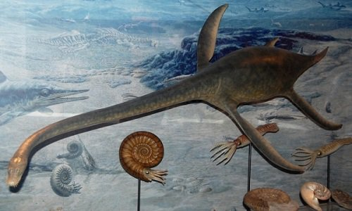 Hóa thạch loài xà đầu long 70 triệu năm tuổi giống quái vật hồ Loch Ness