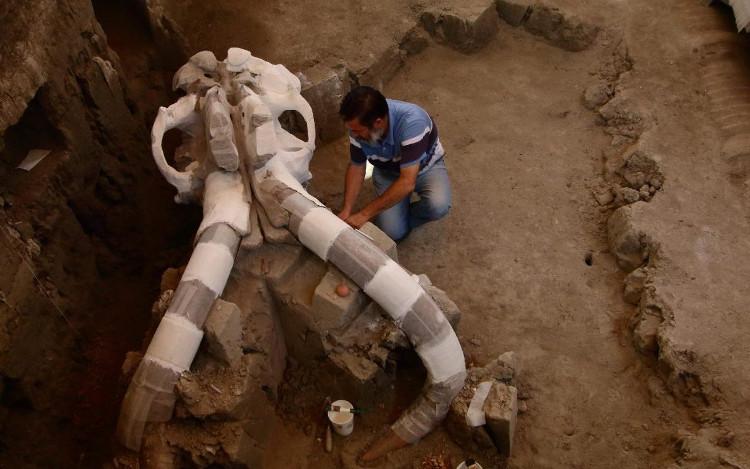 Hóa thạch voi ma mút vạn năm tuổi nặng 10 tấn ở Mexico