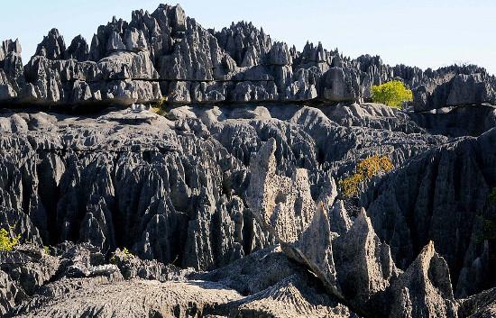 Khám phá hệ sinh thái độc đáo trên đảo Madagascar